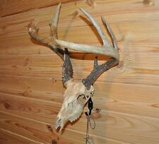 European Skull Mount Hanger Hook Bracket for Deer, Antelope, Hogs ETC..