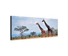 150x50cm Giraffe Wildnis Safari Savanne Afrika Manyara Park Leinwand Sinus Art