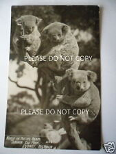 ANTIQUE VINTAGE PHOTO POSTCARD KOALA TARONGA ZOO SYDNEY AUSTRALIA UNPOSTED