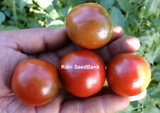 Large Chocolate Cherry Tomato - An Excellent Flavourful Salad Tomato - 10 Seeds!