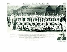 1966 VANCOUVER MOUNTIES  BASEBALL 8X10 TEAM  PHOTO CANADA SEGUI VERNON