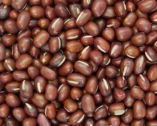 30 graines D'HARICOT AZUKI (Vigna angularis) SEEDS SAMEN SEMILLAS