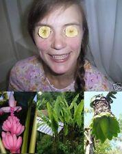 3 winterharte Bananen-Arten schnellwüchsige Giganten Samen
