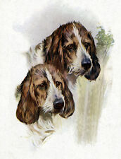 PETIT BASSET GRIFFON VENDEEN DOG GREETINGS NOTE CARD BEAUTIFUL HEAD STUDY PBGV