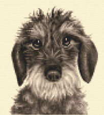 Wire Haired DACHSHUND dog ~ Full counted cross stitch kit