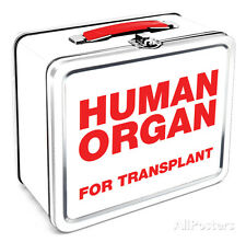 Human Organ Lunch Box Metal Collectible - 8x7