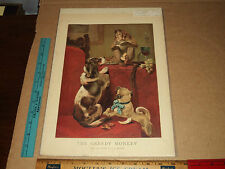 Rare Antique Period 1900's The Greedy Monkey Litho J. Dollman Art Artwork Print