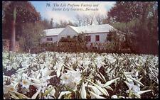 BERMUDA ~ 1940's The Lili Perfume Factory and Easter Lily Gardens ~ Flowers