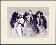 GRAND BLEU DE GASCOGNE LOVELY HEAD STUDY DOG PRINT MOUNTED READY TO FRAME