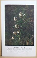 circa 50's / 60's Collectors Card - Cassell's Nature Cards Series A # 36