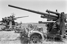 WW2 Photo WWII Captured Axis 88mm  Anti-Tank Guns Tunisia 1943    / 4154