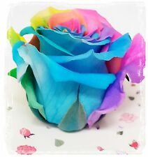 Send Giant Preserved Eternal Real Red Rose 4' Fresh Natural Women Day & Gift Box
