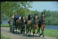 378048 Royal Windsor Horse Show Driving Marathon Carriage Driving A4 Photo Print