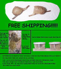 2 Fresh Praying Mantis Egg Cases with Incubators Lowered Price $10.00 Free Ship
