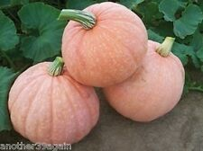 MOONSCAPE F1 PUMPKIN 15 SEED ALSO A GREAT EDIBLE SQUASH