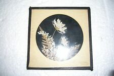 VINTAGE DRIED FLOWER PLAQUE REAL NEW ENGLAND FLOWERS