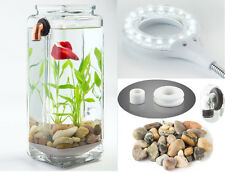 IMPERFECT w/ LED & STONES! NoClean Aquariums Self Cleaning Betta Fish Tank