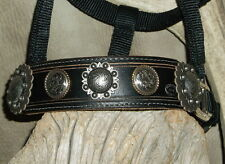 Nice Pony Bronc Halter, Black Leather Nose Band, Old Silver Berry Conchos. G&E
