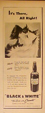 1945 West Highland Terrier Dogs Black~White Whisky It's There All Right Print AD
