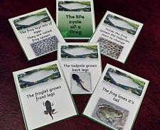THE LIFECYCLE OF A FROG- VISUAL DISPLAY CARDS EYFS- CLASS TOPIC GROUP DISCUSSION