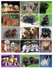 PUPPY DOG PHOTO-FRIDGE MAGNETS (15) IMAGES)