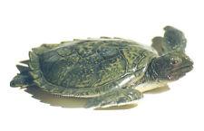 AAA 96071 Large Green Sea Turtle Sealife Animal Model Toy Replica - NIP
