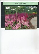 P025 # MALAYSIA PICTURE POST CARD * ORCHID GARDEN, KL