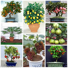Bonsai Fruit Seeds Mega Combo - Apple Orange Lemon Guava Cherry Grapes Papaya ..