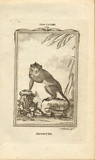 """1785 copper engraving  -  buffons natural history.  """"  aigrette """""""