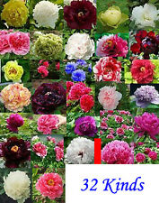 China Peony Seed Paeonia suffruticosa Tree each 20 seed total 640 seeds 32 kinds