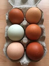 6 x Fertile Hatching Chicken Eggs - Mixed Breeds