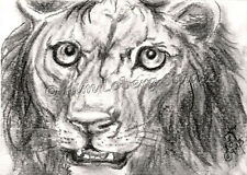 Lion African feline Cat aceo EBSQ Kim Loberg wildlife Mini Art Charcoal Animal
