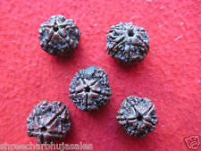 ENERGIZED Original 5 Mukhi Rudraksha Nepal Bead Amulet Pendant Lot Of 5 Mix Bead
