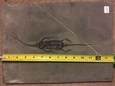 Authentic, Rare Keichousaurus Fossil Plate - Ships From US