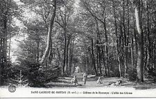 CPA 49 - SAINT LAURENT DU MOTTAY (Maine et Loire) Château de la Houssaye - allée