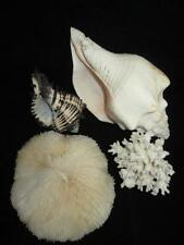 4 Beautiful Natural Seashells~Conch ~ Plate Coral ~ Knobbed Whelk ~ Branch Coral