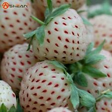 30pcs White Strawberry Climbing Strawberry Fruit Plant Seeds Home Garden