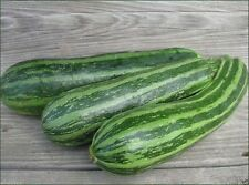 Squash,Cocozelle Zucchini Squash Heirloom (Open Pollinated) bush- 30 Seeds.