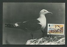 ISLE OF MAN MK VÖGEL MÖWE SEAGULL BIRDS MAXIMUMKARTE MAXIMUM CARD MC CM c9294