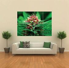 MARIJUANA FLOWER NEW GIANT POSTER WALL ART PRINT PICTURE G780