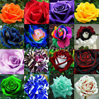 16 Kinds Rare Blue Dragon Multi Colors Rose Seeds Garden Rainbow Black Red Green