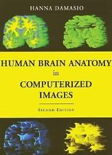 Human Brain Anatomy in Computerized Images-ExLibrary