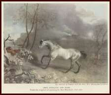 Grey Stallion, HORSE, & Mare, by Ben Marshall, Vintage Print 1945