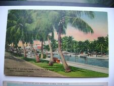 1942 postcard- A Row of Coconut Palms Along the New River, Fort Lauderdale, Fla