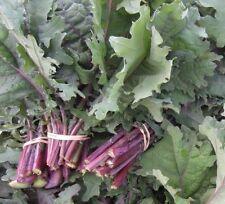Red Russian Kale 500 seeds * Non GMO* EZ grow #1E86#