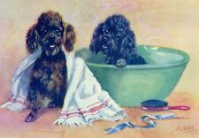 Poodle Dog Bath Time by Mabel Gear 1940's  LARGE New Blank Note Cards