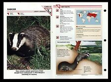 """BADGER"" WILD LIFE FACT FILE ANIMAL INFORMATION CARD/HOME SCHOOL STUDY"