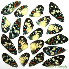 GIFT 20 pcs REAL BUTTERFLY wing material  DIY artwork jewelry  #21