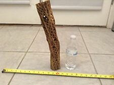 """15"""" THICK STRONG PIECE ORGANIC CHOLLA WOOD*FISH*PLECO*SHRIMP*CRAFTS*CLEAN&BOILED"""
