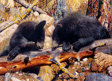 Black Bear (Animal Planet) a 1000-Piece Jigsaw Puzzle by Master Pieces Brand NEW